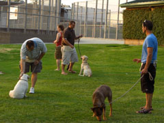 K9 Bar Dog Academy's Training Dog Photos